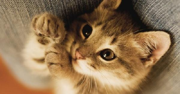 Le chat, animal préféré des Français?