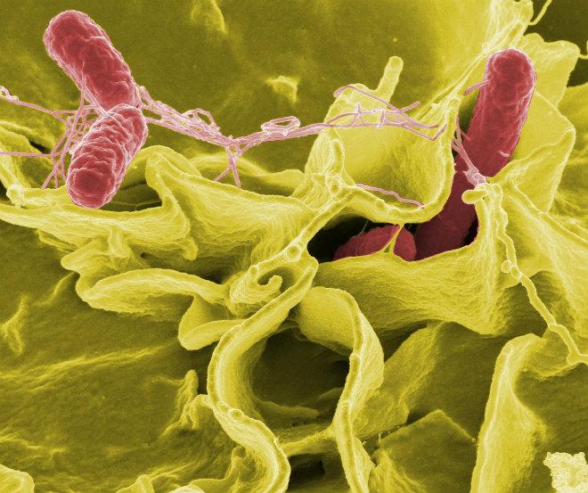 salmonelle virus toilettes