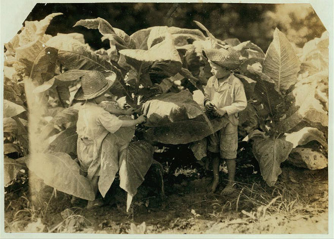 enfants plantation tabac