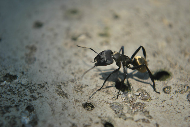 faire fuir fourmis avec marc de café
