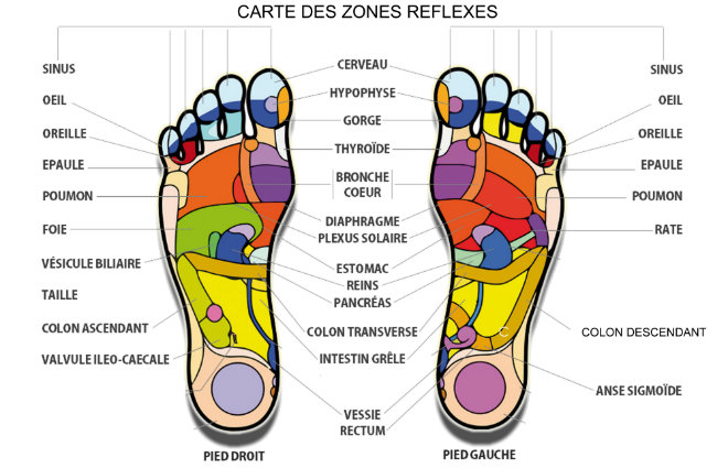 zones reflexe pieds