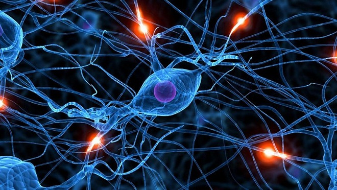 neurones cerveau