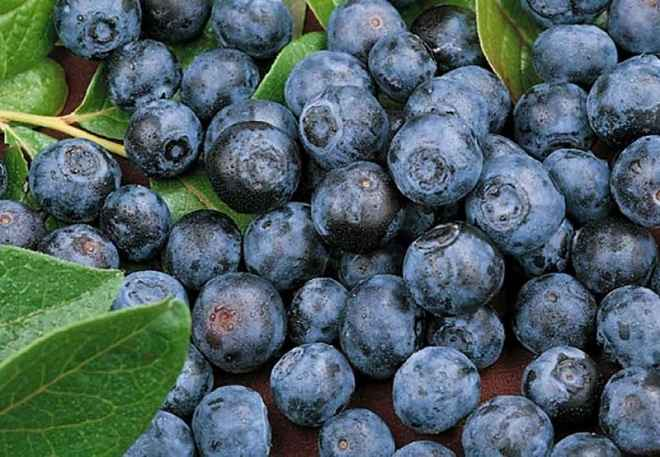 fruits bons poids