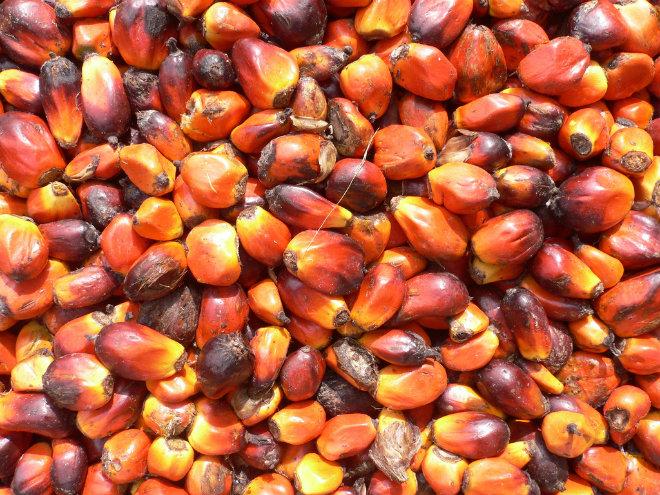 huile palme feve