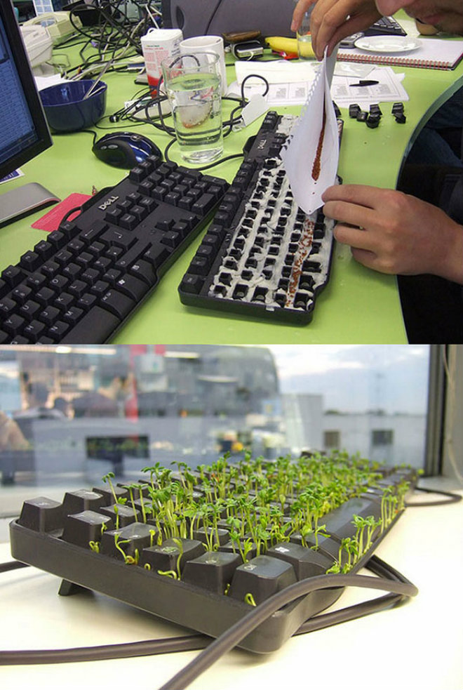 mini-jardin-dans-clavier