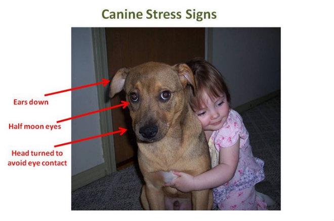 stress chien