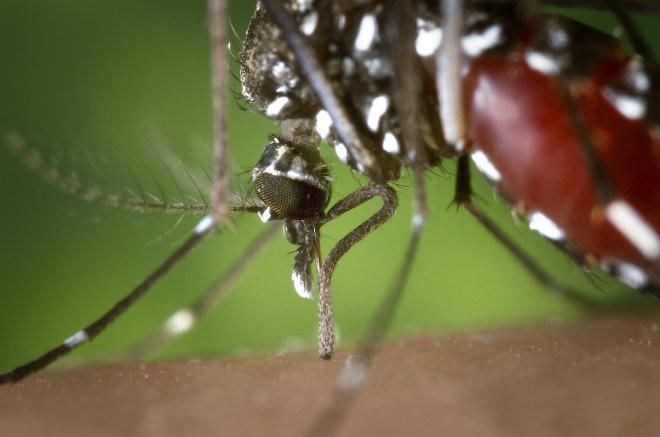 zika france