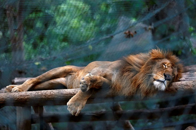 Venezuela zoo animaux