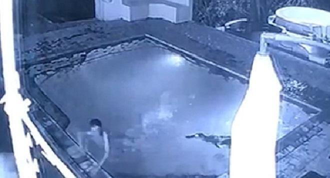 Un crocodile attaque un couple dans la piscine d 39 un h tel for Attaque de crocodile dans une piscine