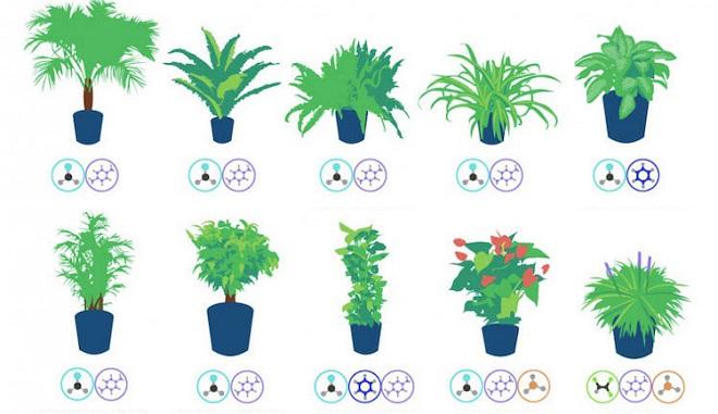 Les meilleures plantes d int rieur pour purifier l air chez vous selon la nasa - Plante qui purifie l air ...