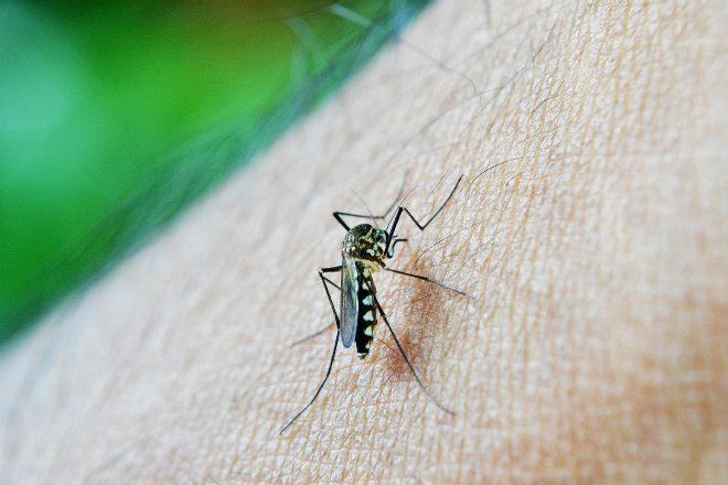 premier vaccin dengue