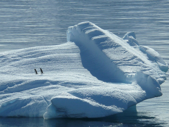 temperatures douces pole nord