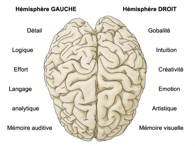 cerveau-parties-droite-gauche