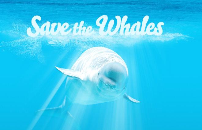 pornhub baleine