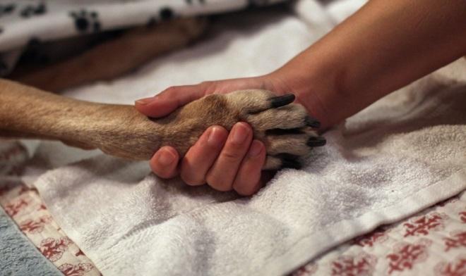 Congés pour deuil animal de compagnie