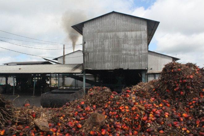 production huile palme