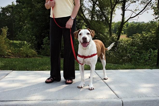 promener-chien